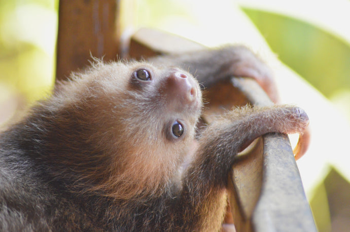 10 Interesting Facts About Sloths You Might Not Know