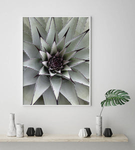 Succulent Digital Wall Print - Salt&Printer