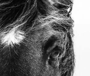 Handsome Horse Digital Wall Print - Salt&Printer