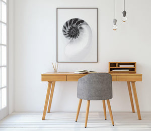 Nautilus Digital Wall Print - Salt&Printer