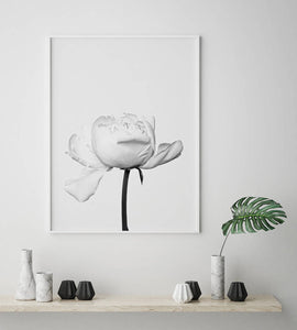 White Peony Digital Wall Print - Salt&Printer