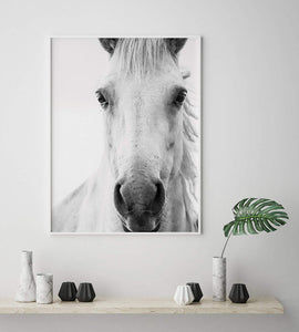 White Horse Digital Wall Print - Salt&Printer