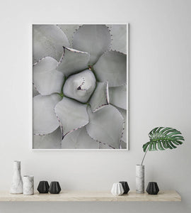 Succulent Digital Wall Print II - Salt&Printer