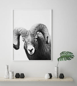 Ram Digital Wall Print - Salt&Printer