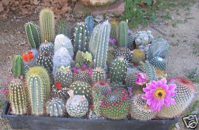 Assorted Cactus Collection (9)