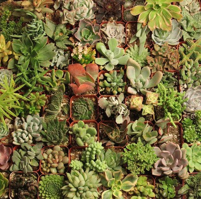 Distinctive Potted Succulents (36)