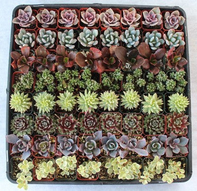 Fun & Funky Succulents (125)