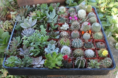 Cool Cactus & Succulent Collection (64)