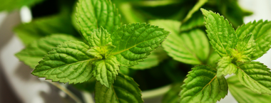 Peppermint: Awaken and Energize All Senses
