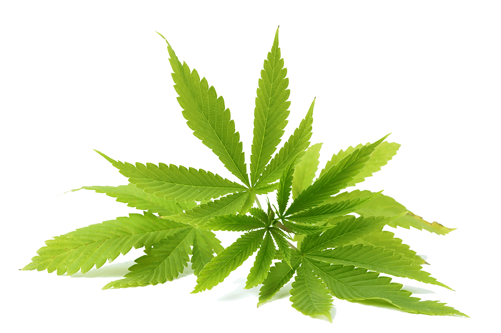 What are the skin benefits of CBD derived from Hemp also known as cannabis sativa?