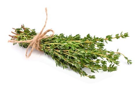 Thyme - A Natural Remedy