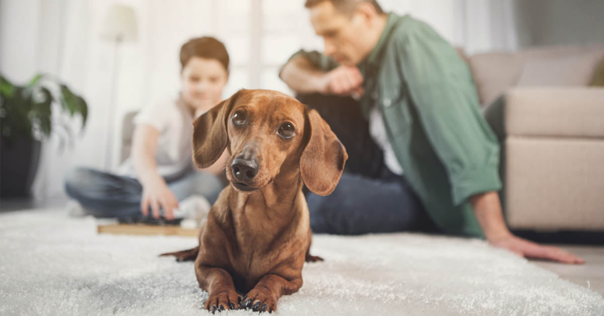 Owning a Dachshund is Great for your Health