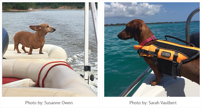 Boating Dachshunds