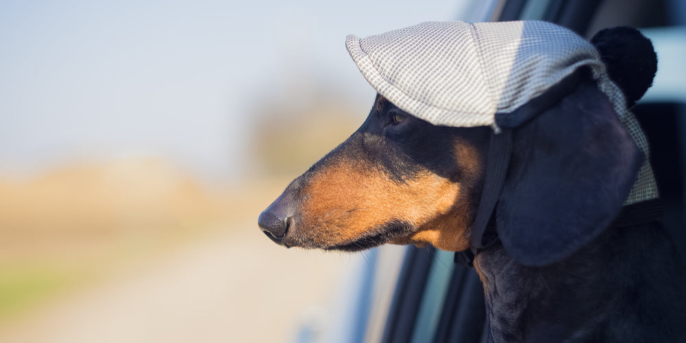 Doxie Roadtrip! What Should I Know Beforehand?