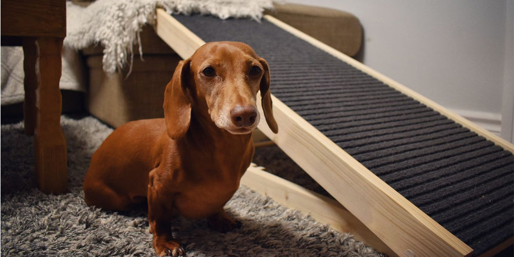 How to Take Special Care of your Senior Doxie