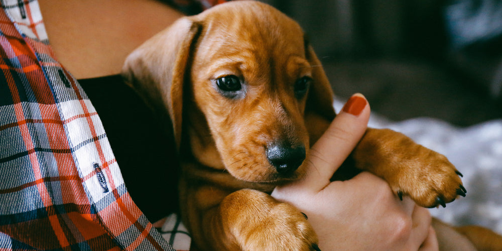 Top 5 activities to bond with your doxie