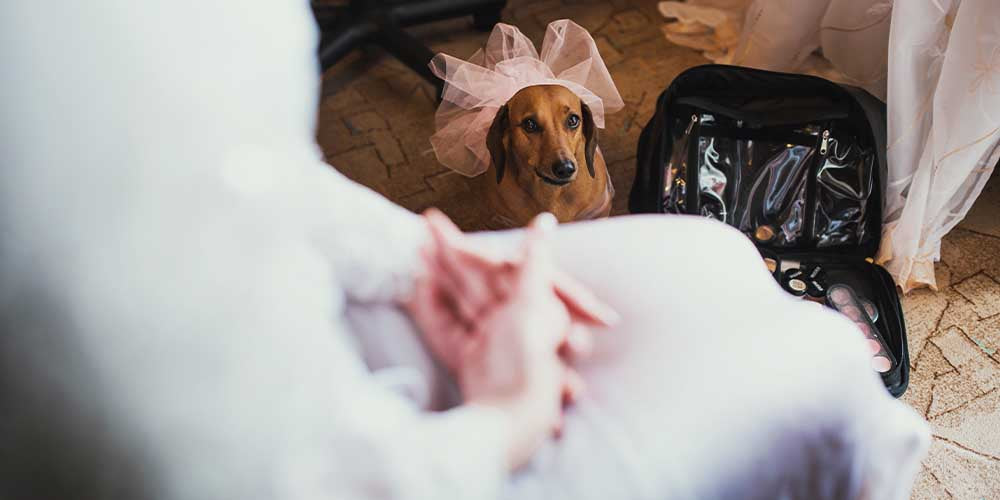 How to Feature Your Doxie in Your Wedding: 3 Ideas for the Pawfect Day!