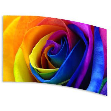Rainbow Rose - Motion In Ink