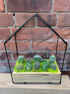Cactus House with 10 Mini Cacti
