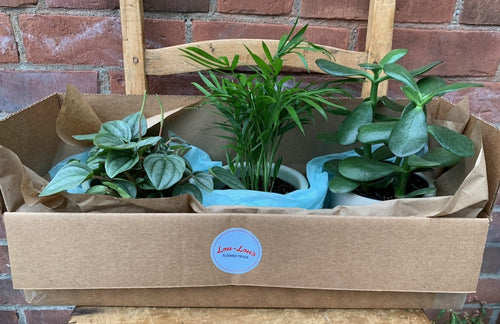 Lou-Lou's Plant Sampler Pack (build your own)