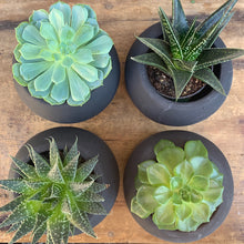 Load image into Gallery viewer, Succulent Boxset (Set of 4)