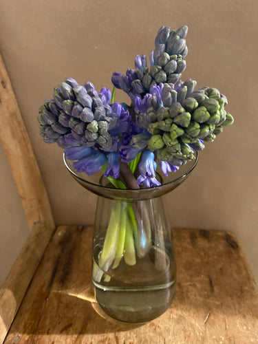 Blue or Pink Hyacinths in Tall Kinto AQUA CULTURE Vase