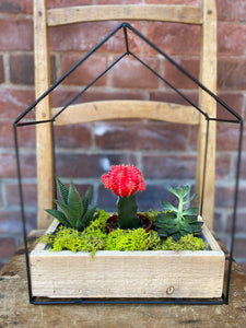 Planter House with Assorted Succulents and Cacti