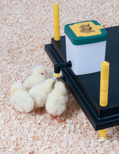 PRE-ORDER: Chick Water Bottle with Hinged Lid and Mounting Bracket - Urban-Egg - Poultry Roll Away Nest Boxes, Chicken Feeders, and More