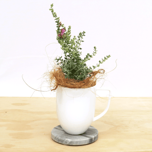 Thyme with the Cats Plant Gift