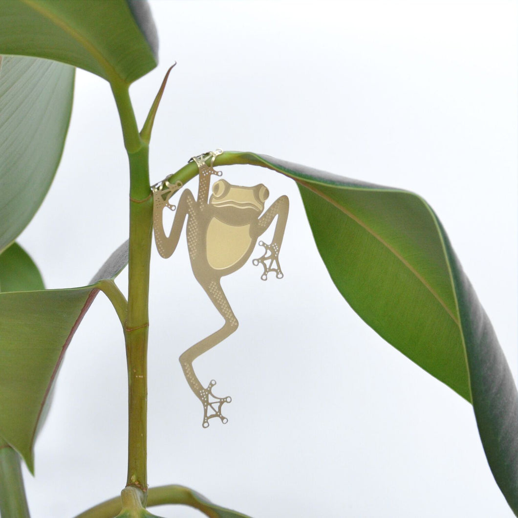 Plant Animals – Green Tree Frog