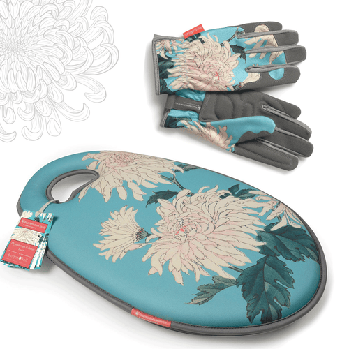 Chrysanthemum Gift Set