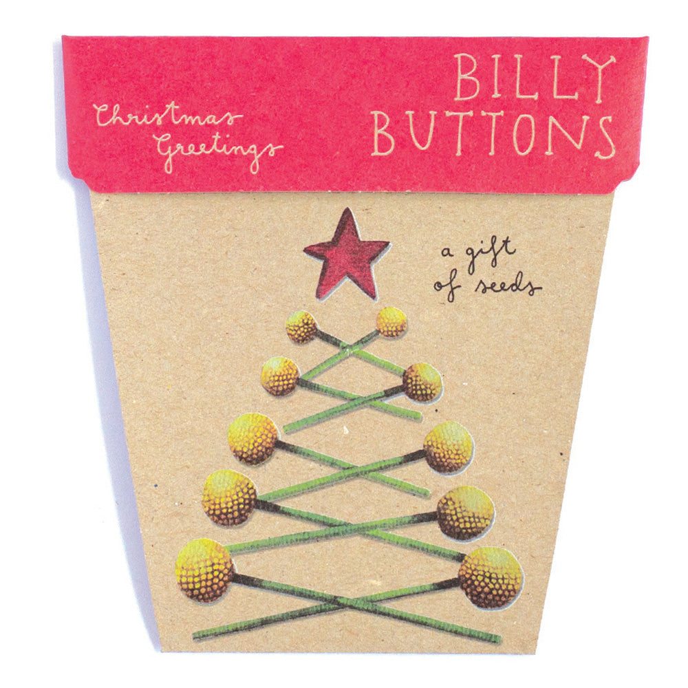 Billy Buttons Christmas Card - Gift of Seeds