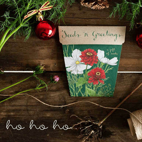 Seeds 'n Greetings Christmas Card - Gift of Seeds | Seeds | Plant Gifts | The Potted Garden