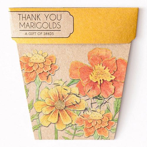 Thank You Marigold - Gift of Seeds | Seeds | Plant Gifts | The Potted Garden