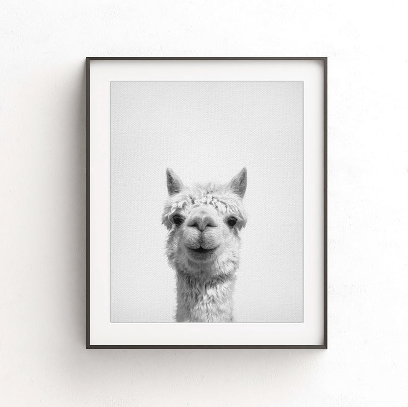 alpaca nursery print black white photo animal art