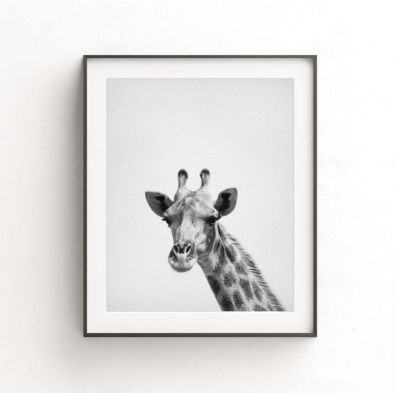 giraffe print nursery decor black white photo animal art