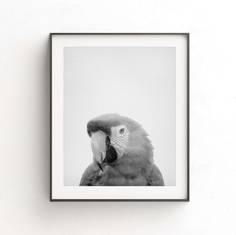 parrot instant digital download print bird