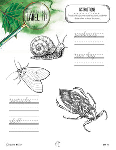 Creepy Crawlies Cursive Writing Notebook (Digital)