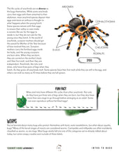 Load image into Gallery viewer, Creepy Crawlies Family Bundle (Digital)