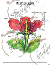 Load image into Gallery viewer, Botany Posters in Watercolor  (Digital)