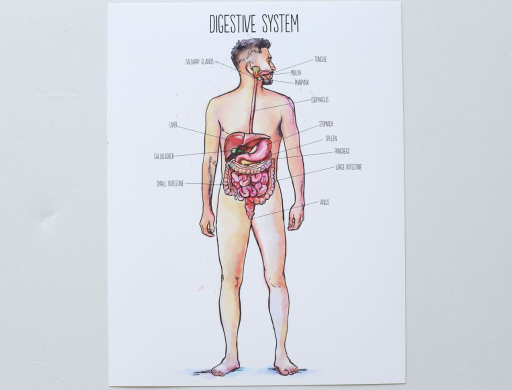 Human Body Posters in Watercolor  (HARD COPY)