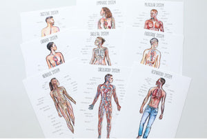 Human Body Posters in Watercolor  (DIGITAL)