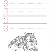 Load image into Gallery viewer, Letters + Numbers 3: In the Jungle Handwriting Book (HARD COPY)