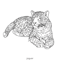 Load image into Gallery viewer, Letters and Numbers: In The Jungle Coloring Book (HARD COPY)