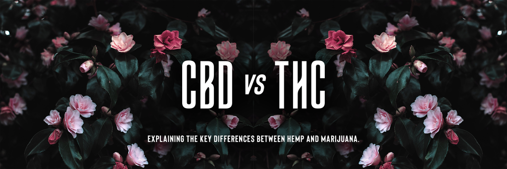 CBD vs THC: What's The Difference Between Hemp & Marijuana?