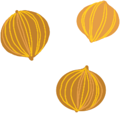 Illustration of a few coriander seeds