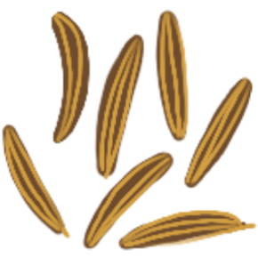 Illustration of a few cumin seeds