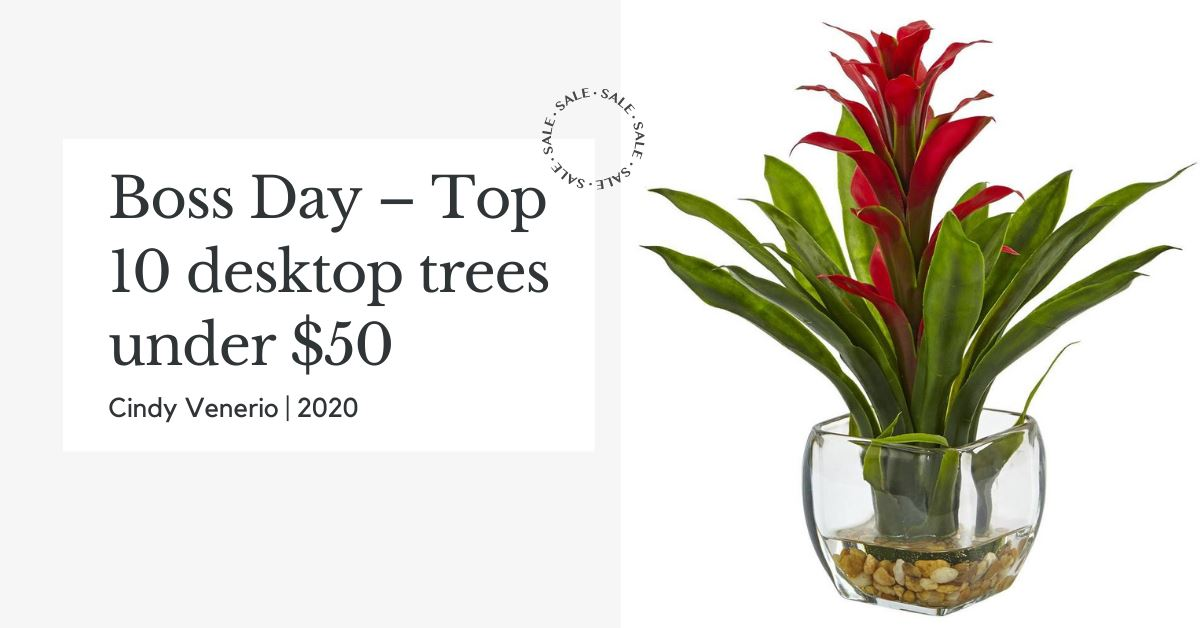 Boss Day – Top 10 desktop trees under $50