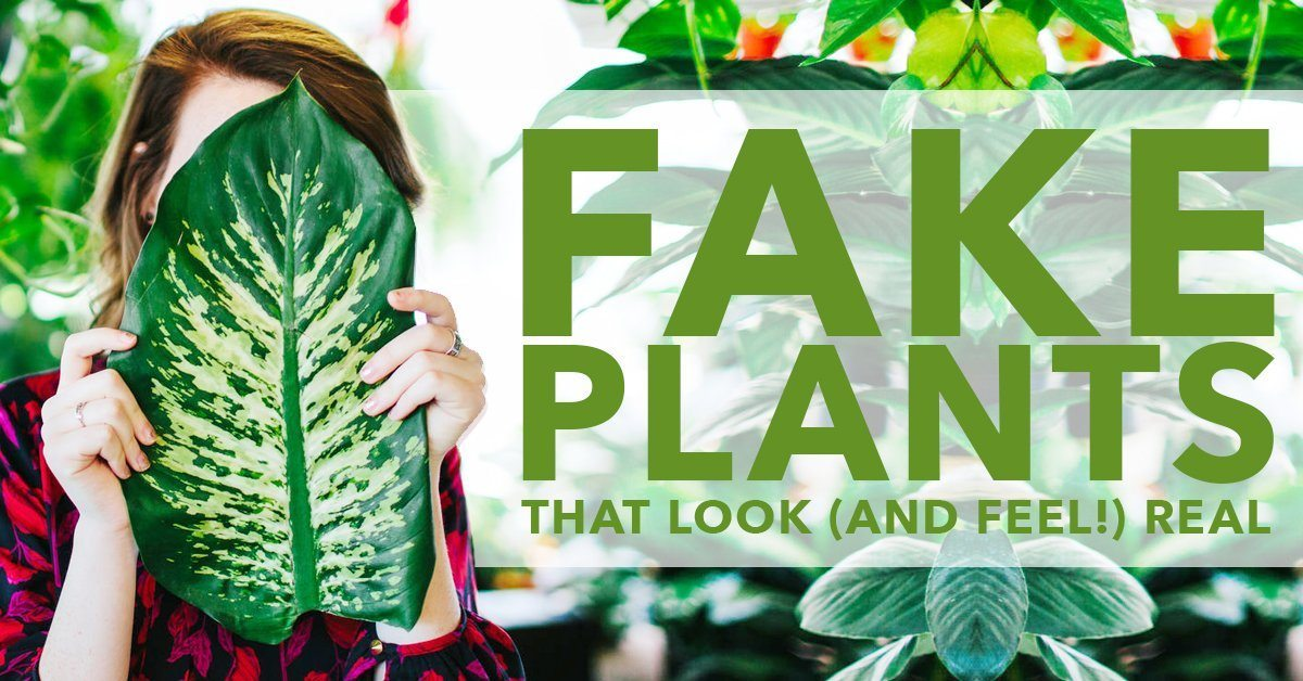 Fake Plants That Look Real