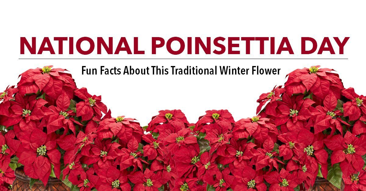 Happy National Poinsettia Day